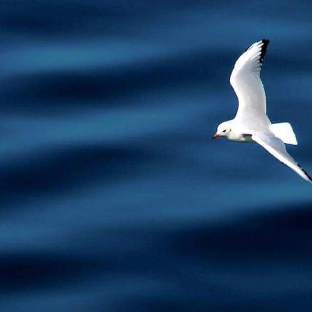 SEAGULLS: THE SYMBOL OF ISTANBUL